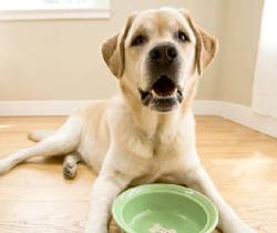 Σκύλος τρώει